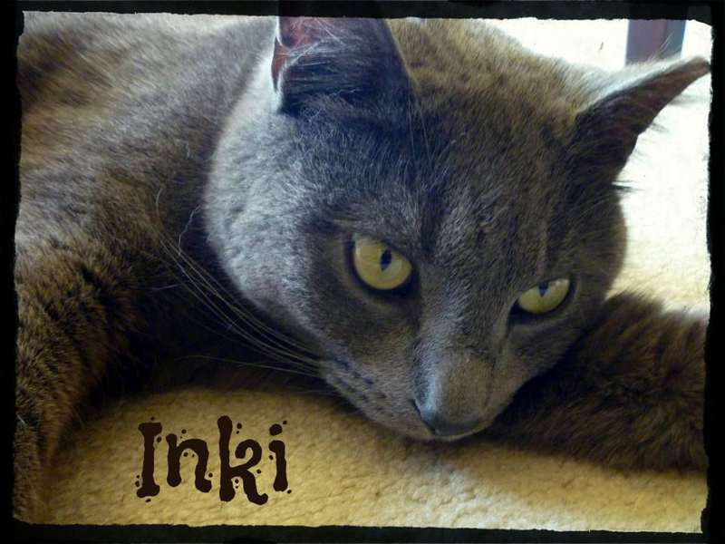 Close up shot of a cat with the name Inki written on the bottom.